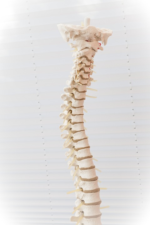 скалеоз позвоночника, кости