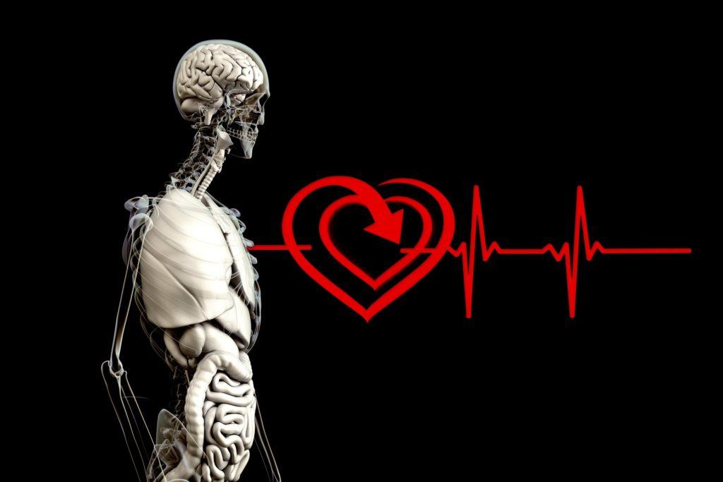 изображение скелета человека с внутренними органами