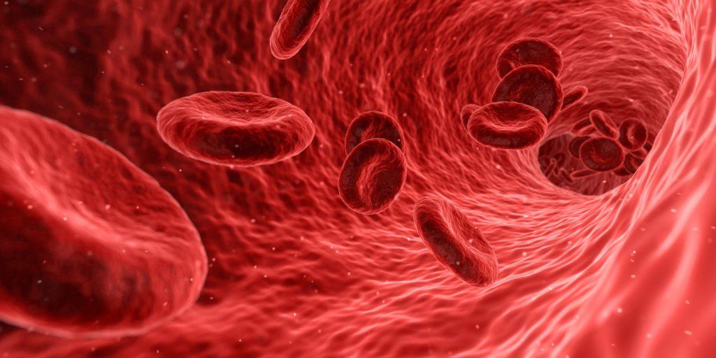 изображение сосуда с эритроцитами