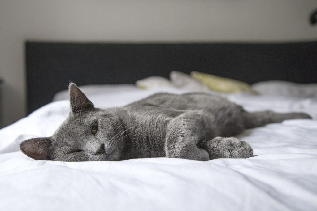 серый кот который спит на белой простыне