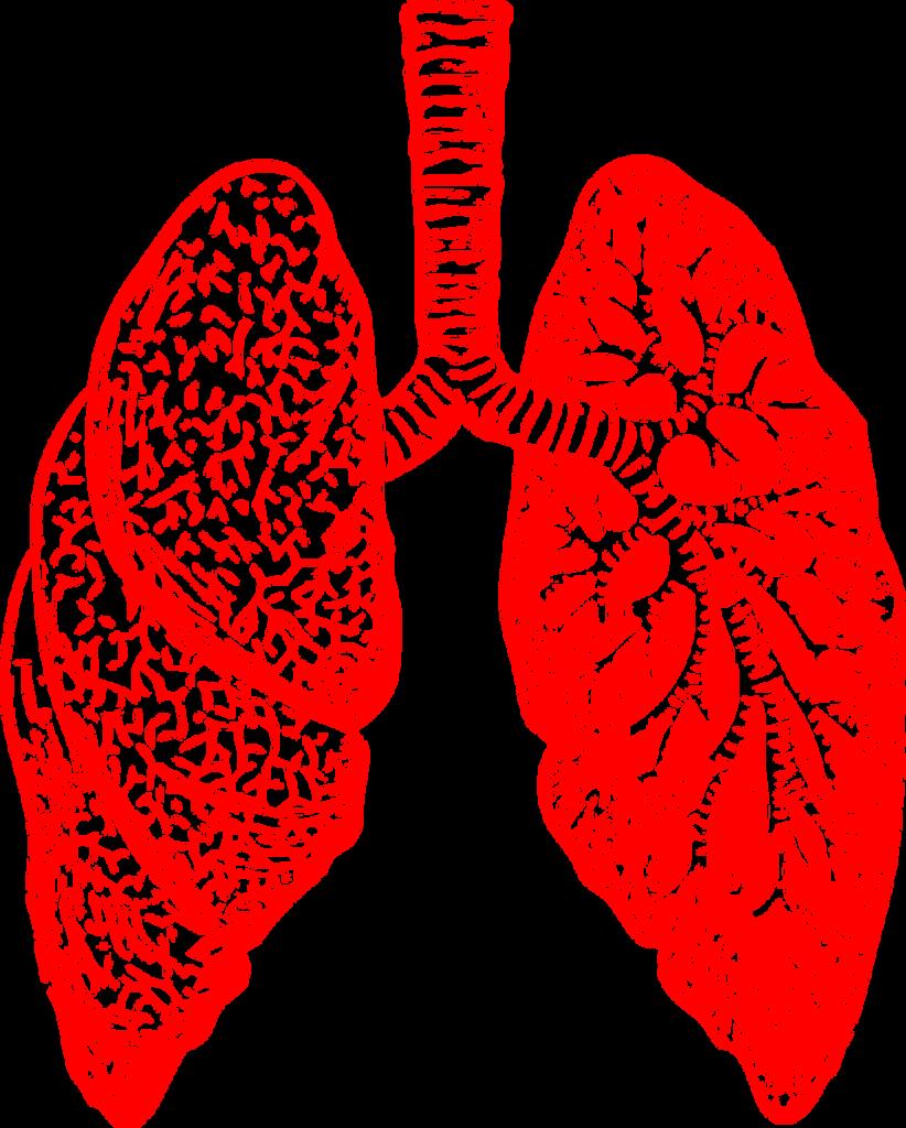 изображение легких и бронхов красным цветом