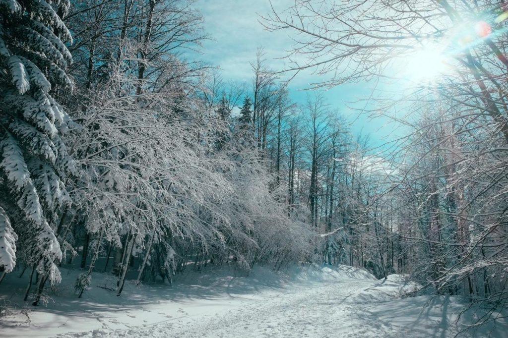вид зимнего леса в солнечную ясную погоду