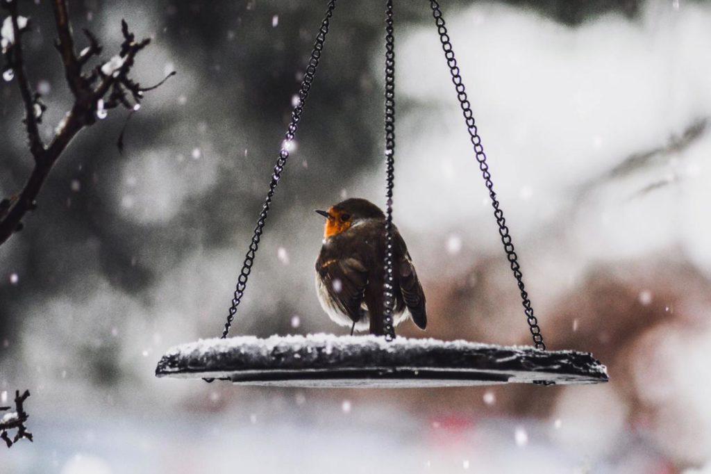 птица сидит на кормушке, подвешенной на дереве